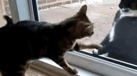 猫咪看到外面有位猫兄, 就想和它玩, 可开不了门