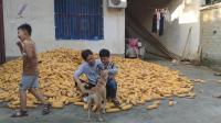 儿子一星期回家一次, 回到家爸爸又抱又问, 家里的狗也想小主人了