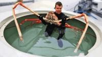 世界上最大的螃蟹, 长4米多可以活100年, 鲨鱼都不是它对手
