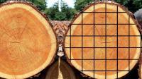 好先进的木头加工机械, 网友: 不知道得卖多少木材可以回本