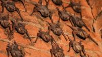 """印度""""蝙蝠女""""和上千只蝙蝠生活20年, 网友: 被咬怎么办?"""