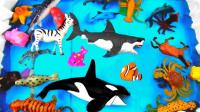 认识海洋动物大鱼吃小鱼双人版