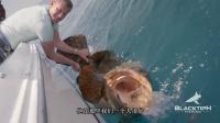 钓鱼:300斤的大鱼是这么被钓鱼人拉起来的 能吃人的鱼