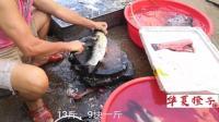 中秋节的今天, 老爸的鱼摊一大早就卖出13斤大草鱼, 一条将近40块