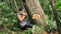 原始技术, 小哥用自己炼制的铁斧, 砍倒了第一棵大树