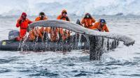 中国成为南极最大客源之一, 中国游客素质令外国导游大跌眼镜!