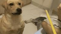 男主人不看娃只顾玩游戏, 狗狗赶紧跑去拿棍子, 太逗了