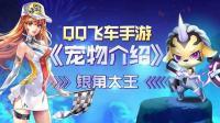 紫瞳妖魅小精灵 宠物介绍之银角大王