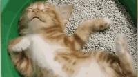 一大波正在睡觉的小奶猫, 萌出血了啊