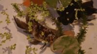观复嘟嘟——古人如何养鱼, 不错看最美中国鱼