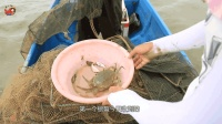 """渔民一家三口出海收螃蟹, 中途收到""""水黄蜂"""", 运气可真背!"""