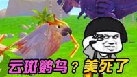 创造与魔法再絮: 这只云斑鹦鸟骑上的感觉你想象不到