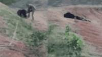 男子野外强行与懒熊合影  惨被活活咬死