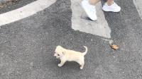 大学生7楼扔狗被指责竟称:一条畜牲至于吗