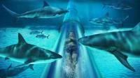 世界上最刺激的水滑梯, 要从鲨鱼群中穿过, 你敢去吗?