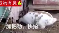 为了救出被困小猫, 兔兔疯狂掘地挖洞!