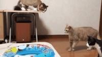 主人在打气, 几只猫咪反应太逗了