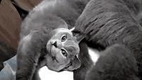 母猫给小奶猫作清理, 主人喊公猫来看小猫, 公猫: 全家共用一张脸