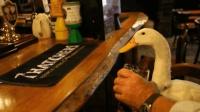 爱喝啤酒的鸭子, 喝醉就耍酒疯, 网友: 这才是正宗的啤酒鸭!