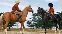 世界上最漂亮的马, 有着高贵优雅的气质, 为何却不被人喜欢