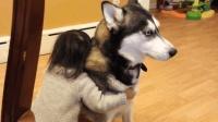 小宝宝跟狗狗抢狗窝, 一人一狗互不退让, 狗狗: 惹不起惹不起