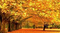 12星座谁最喜欢秋天? 金牛座喜欢秋天是为了吃!