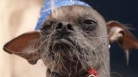 世界最丑狗狗大赛, 选出全球最辣眼睛的狗, 首届冠军来自中国!
