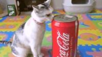 喵星人想喝可乐, 不料被主人套路了, 差点在可乐罐里出不来