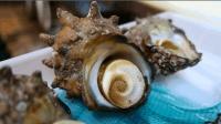 海螺怎么吃才鲜? 看料理厨师如何处理, 这样的吃法你接受吗?