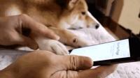 铲屎官真会玩, 把狗的爪子设成手机解锁, 狗子的内心是崩溃的