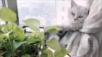 猫咪每天像个大爷似的, 躺在这里欣赏窗外的风景