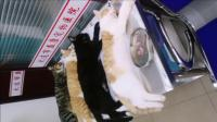 一起做完绝育的猫咪, 猫: 来兄弟们, 我们进宫做姐妹!