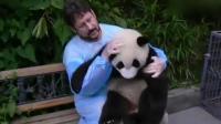 熊猫宝宝不喜欢被老外摸耳朵-再摸咬你哦! 苹果一来, 瞬间变乖