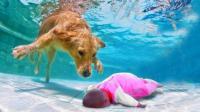 狗狗勇救落水孩童, 这一幕太感人了, 镜头拍下全过程!