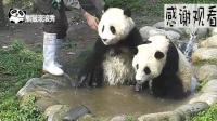 熊猫: 奶爸你走开, 熊家要自己洗澡