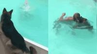 女子泳池假装溺水 忠犬咬住她头发往岸上拖