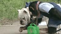 四川方言: 猩猩带狗狗捉蚂蚱吃, 捉一只就开始玩笑安逸