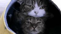 小伙伴非要跟自己挤一个窝, 猫咪一脸不爽, 太逗了