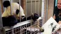 动物会武术, 谁也挡不住! 大熊猫挥笔画国画, 每副竟卖4000元!