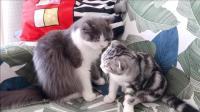 小猫咪被猫姐姐打了一下, 接着就委屈了起来, 好可怜