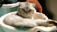 被这样的小猫咪盯着看, 还有点小害怕呢