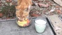 偶遇流浪猫, 好心妹子回家给做了吃的送来, 每个生命都值得被尊重