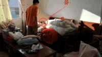 2个月花费1200元的宠物, 在睡觉的棉被里生了3只小家伙, 该怎么养