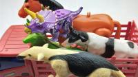 动物车里装了好多动物, 认识一下食蚁兽