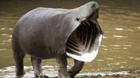 闻所未闻! 连动物都身价过亿了? 世界上最贵的4种动物