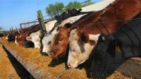 如果一头牛吃巧克力长大, 会是什么味道呢? 看到价格我犹豫了