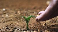 男子被遗忘在火星上, 靠种植一种农作物生存了561天, 方法有点恶心!