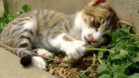 一群猫咪聚众吸猫薄荷, 没想到一个个都吸大了! 猫咪: 再吸一口