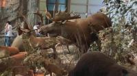 大神和桐桐逛上海科技馆, 大神带你看上海科技馆的神奇动物