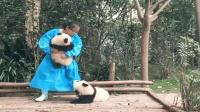 熊猫宝宝: 凭什么抱它不抱我, 我也要抱抱